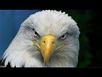 Vídeo Motivacional - O Exemplo da Águia.mp3.mp3